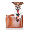 briefcase_dog_small