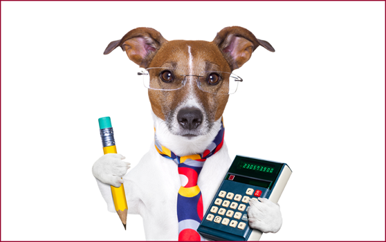 calculator_dog_72