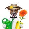 flowerpot_dog_small